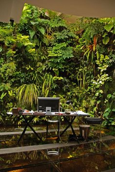 """""""Patrick Blanc (born 1953, Paris) is widely regarded as a great artist, a designer, and the inventor of modern green wall; yet, I suspect he actually considers himself above all a scientist, a researcher, and a nature's investigator."""" (RICCARDO BIANCHINI ). Patrick Blanc's office; in background, a 30-year-old vertical garden ' #patrickblanc #vertical garden #livingwall / Source: http://www.verticalgardenpatrickblanc.com/"""