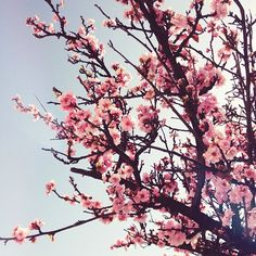 Spring blooms | @designconundrum