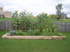 Vegetable Garden Ideas For Beginners best places to live, home improvement, diy and more | summary