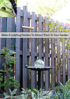 Make A Ladybug Feeders To Attract Them To Your Garden   Read here > http://www.livinggreenandfrugally.com/make-ladybug-feeders-attract-garden/