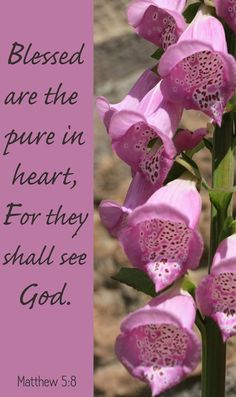 Matthew (KJV) Blessed are the pure in heart: for they shall see God. Scripture Verses, Bible Verses Quotes, Bible Scriptures, Scripture Pictures, Prayer Verses, Bible Prayers, Faith Prayer, Religious Quotes, Spiritual Quotes