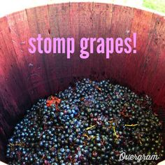 Bucket List: stomp grapes!