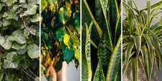 10 φυτά που καθαρίζουν τον αέρα στο σπίτι | Τα Μυστικά του Κήπου Plant Leaves, Flowers, Plants, Garden Ideas, Plant, Landscaping Ideas, Backyard Ideas, Royal Icing Flowers, Flower