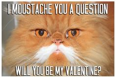 <3 Valentine Day Love, Valentine Cards, Valentines, Crazy Cat Lady, Crazy Cats, Cat Puns, Nice Sayings, Kitty Kitty, Just For Fun