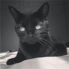 Black cat #Oberon