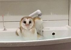 Bathing Owl