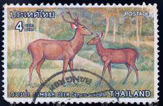 Thailand Stamp - Deer
