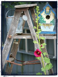 Sweet birdhouse on an old ladder.