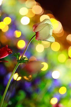 jakupwashere: magicalnaturetour: Light decorado de flores (por Takashi (AES256)) ╰ ♥ ╮