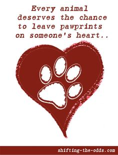 Leaving pawprints...