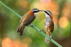 500px / A Touch Of Love by Sue Hsu