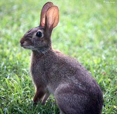Bunny Rabbit | Bunny Rabbit by HeatherHuntington