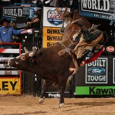 PBR Bushwacker comes from behind to win his third championship Cow Cat, Rodeo Events, Professional Bull Riders, Bucking Bulls, Rodeo Cowboys, Rodeo Life, Charro, Rough Riders, Bull Riding