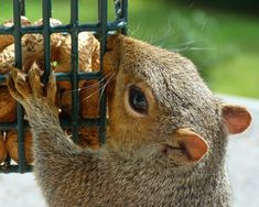 How To Get Rid Of Squirrels With Baking Soda Squirrel