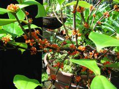 Flowering Shrubs, Botanical Gardens, Plants, Flowering Bushes, Plant, Planets