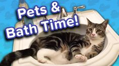 Pets in the Bath! // Funny Animal Compilation… #funnypetvideos #funnyanimals