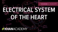 Electrical system of the heart   Circulatory system physiology   NCLEX-R...