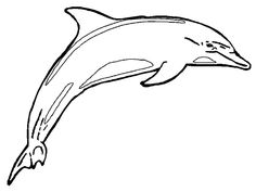 dolphin printables | Dolphin Coloring Pages