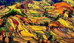 Picturesque China : Nuorilang Waterfall, Jiuzhaigou Valley, Sichuan, China