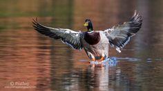 10 Surefire Tips for Photographing Birds in Flight