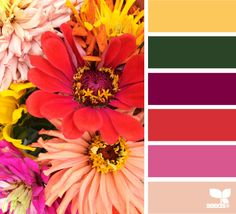 Autumn Brights - http://design-seeds.com/index.php/home/entry/autumn-brights3