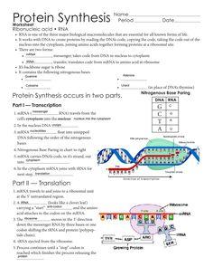 Molecular Biology, Science Biology, Teaching Biology, Life Science, Science Education, Protein Biology, School Study Tips, School Ideas, Biochemistry Notes