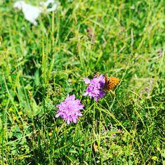 #bernesealps #hiking #swissnature #photography #iphone8plus #lovenature #lovelife #lovemountains #loveme #potraitphotography #lenk #adelbodenlenkdänk #adelboden #hahnenmoos #wildstrubel