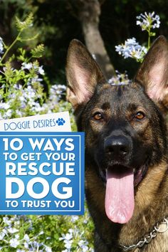 10 Ways To Get Your Rescue Dog To Trust You - Doggie Desires Wondering why your rescue dog won't respond like you'd expect another dog to? Here's 10 ways to get your rescue dog to trust you Rescue Dogs, Pet Dogs, Dogs And Puppies, Shelter Dogs, Animal Shelter, Animal Rescue, Dogs Trust, Yorkshire Terrier Puppies, Dog Care Tips