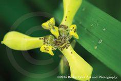 Yellow Rainforest Flower Fine Art Photo Print by BeckyTylerArt, $20.00