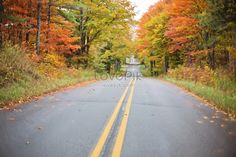 Free Image on Pixabay - Autumn, Fall, Road, Yellow, Nature Free Pictures, Free Photos, Free Images, Cinderella Quinceanera Themes, Autumn Leaves Background, Road Photography, Medical Journals, Old Song, Life Challenges