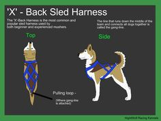 sled dog harness types - Поиск в Google