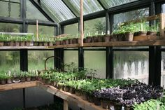 down to earth digs « life in and around the garden #provisionsfarms more of her lovely greenhouse