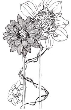 line drawing - flowers - dahlias