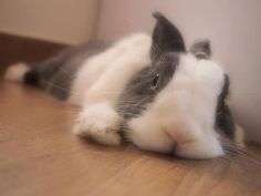 Bunny looks so mellow and lovely.