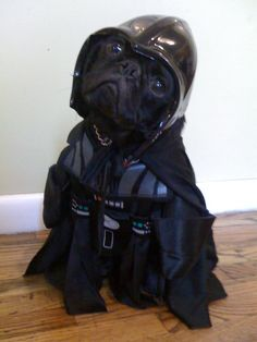 Darth Pug - I find your our lack of treats disturbing. Yes I am force choking you. Pugs do the breathing perfect! Pug Love, I Love Dogs, Cute Dogs, Raza Pug, Funny Animals, Cute Animals, Baby Animals, Dog Costumes, Pet Shop