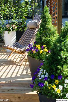 puutarha,lepotuoli,orvokki,piha,istutus