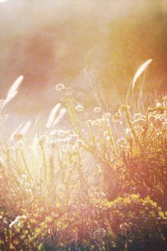 late summer golden afternoons <3 by afieldjournal.blogspot.com