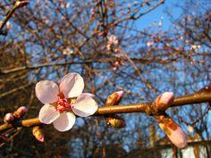 tavasszal Budán