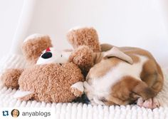 Read to find out more about me and my family   #Repost @anyablogs with @repostapp.  Recently my husband and I have been questioning whether or not a second dog would be a good choice for us. Together we came to the conclusion that York would love to have a companion. And already York and his new baby sister Ro are showing us we have made the right decision.  York and Ros names have significant meaning behind them. Chris and I had a long distance relationship. I lived in Florida and he lived…