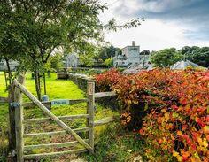Fall is here #plymouth #visitdevon #nationaltrust #ilovesouthdevon#southdevon #visitbritain #lovefordevon#ukpotd#SWisBest#britainsoceancity#d810 #nikon #travelgram #potd @nationaltrustsouthwest @bucklandabbeynt#history #bucklandabbeynt #photosofengland