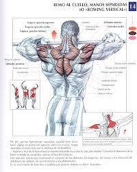 The Anatomy of The Upright Row Workout. The upright row is a weight training exercise performed by holding a grips with the overhand grip and lifting it str Gym Workout Tips, Strength Training Workouts, Workout Fitness, Shoulder Mass Workout, Muscle Anatomy, Muscle Building Workouts, Chest Workouts, Back Muscles, Sport Motivation