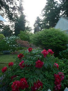 89 Best Great Shrubs For Zone 5 6 Images Shrubs Plants Garden
