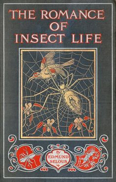 michaelmoonsbookshop:beautiful book cover with gilt spider and bird design it has been pointed out that neither a spider or a bird are insects. but it an attractive cover never the less. Book Cover Art, Book Cover Design, Book Design, Book Art, Leather Book Covers, Leather Books, Vintage Book Covers, Vintage Books, Old Books