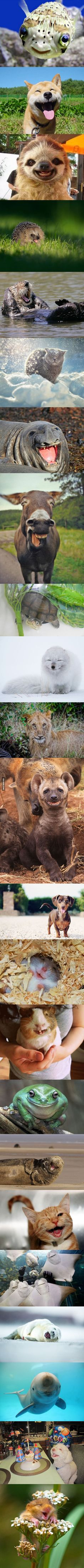 brighten up your day! The happiest animals in the world. ..