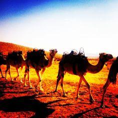 """A definite bonus of camping with a Bedouin tribe in Israel was that they let me ride their camels through the desert one afternoon! #israel  #travel #travelgram #takemethere #latergram #smartertravel #travelblogger #lifestyle #trip #explore #jetsetter #backpacker #travelphotography #jetsettering #nomadic #wonderlust #viajero #viajem #worldingram #passionpassport #insta_international #photo #photographer #voyage #worldcaptures #lifeofadventure #aroundtheworldy #darlingescapes  #expediapic…"