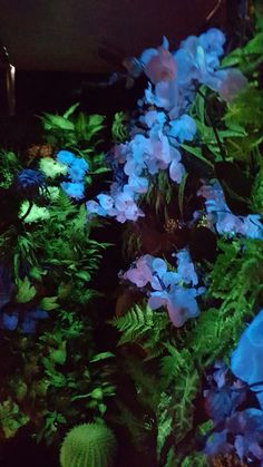 flAVATAR - Magical Flowers in Sirha Budapest 2016