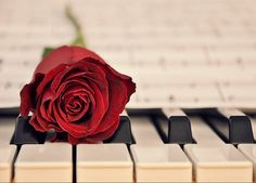 {I love this picture of a red rose resting on piano keys.}