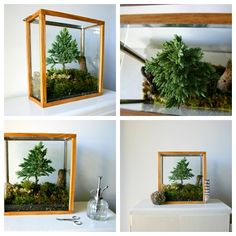 Table Top Forest Terrarium di PsychicCeremonies su Etsy