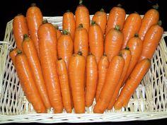 Danvers carrot all heirloom