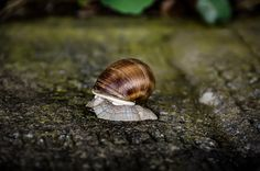 Snails Pace - Romania Photography by Nick Laborde